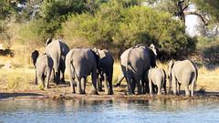Namibie & Botswana (2013) (mark_heinis) Tags: botswana namibie 2013
