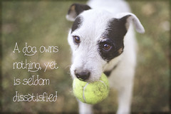 IMG_3519 life (Bettina Woolbright) Tags: dog jack jrt russell quote canine terrier layer phrase bettina ps4 woolbright bettinawoolbright woolbr8stl