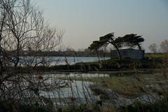 altro che paura (Antonio_Trogu) Tags: trees italy house alberi reeds casa italia lagoon laguna canne veneto albarella polesine antoniotrogu