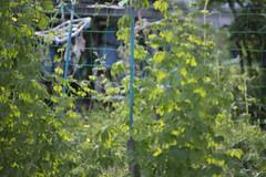 20130719-_DSC7813 (Fomal Haut) Tags: walking nikon  80400mm d4     sanpocamera