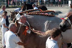 DSC_2218 (Ton van der Weerden) Tags: horses horse dutch de cheval belgian nederlands belges draft chevaux belgisch trait ijzendijke trekpaard trekpaarden