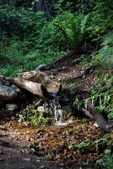 Little Mini Waterfall (Crystal_rivera) Tags: trees nature water rocks trails hike miniwaterfall