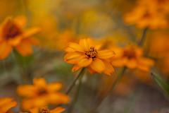 Botanische Tuinen Utrecht (siebe ) Tags: flower netherlands utrecht bloem 2013 botanischetuinen bloemenenplanten