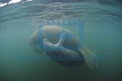 2013 06 ESK FLORIDE CRISTAL RIVER 0028