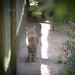 Wild Cat 2