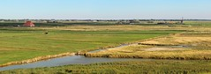 The beautiful Hargerpolder is over 400 years old (Bn) Tags: wood sea summer holiday holland mill beach netherlands windmill bike landscape cycling coast construction sand topf50 ramp sheep flood hiking path farm north shoreline running shor