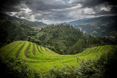 Step rice field, Mu Cang Chai - Yen Bai - Vietnam (Anh Dang ^_^) Tags: mountain west green tourism field vertical rural canon landscape countryside is rice farm north terraces tourist vietnam highland step crop western agriculture northern hdr contour attraction riceterraces 6d 24105 mountainous yenbai mucangchai