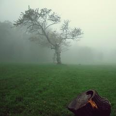 di nebbia, di autunno e di silenzi ovattati... (Claudia Gaiotto) Tags: autumn tree field fog season silence autunno otono brumes nebla