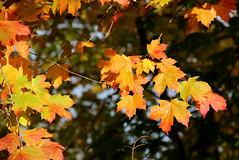 Cherokee Park (KYcactus) Tags: park lake fall colors kentucky willow louisville cherokee