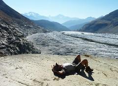 Aalen mit Aletsch (geddakk) Tags: schweiz gletscher wallis aletsch platta märjelesee