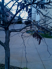 Winter Tree (BBWFILM) Tags: b winter tree mono la hall photo foto d g c cellular chrome f e morgan captures monchrome œ a į ł