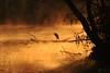 """Airone cenerino in silhouette (Claudio61 una foto ferma un ricordo nel tempo) Tags: parco gelo silhouette alberi canon landscape reflex ticino foto fotografie alba fiume natura campagna fotografia sole nebbia albero acqua reflexions autunno colori riflessi paesaggi lombardia freddo luce paesaggio ayala controluce vigevano fumo lomellina riflesso foschia contrasti fotografare airone sfumature umidità tranquillità fiumeazzurro lanca aironecenerino canon7d """"flickraward"""" uniqueaward flickrunitedaward claudio61 virgiliocompany musictomyeyeslevel1"""