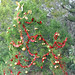Trees_of_Loop_360_2013_036