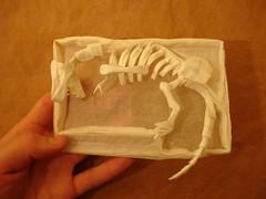 Nguyen Minh Duc- Dinosaur Skeleton (shuki.kato) Tags: paper skeleton fossil one origami dinosaur sheet fold minh nguyen duc tyrannosaurus