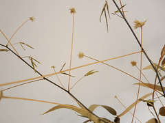 {decoration} ('Art & Natura') Tags: decoration merrychristmas