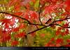 danbo_010 (iskandarbaik) Tags: park uk autumn trees england tree cute home forest toy photography leaf woods bokeh outdoor manga cardboard autumnal yotsuba danbo danbooru revoltech danboard cardbo danboru