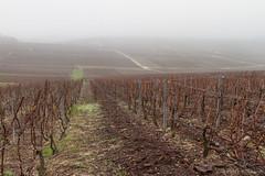 Le vignoble champenois en hiver (Patrick Mayon) Tags: winter france nature fog landscape vineyard champagne hiver vin 51 paysage vignes vignoble brouillard vigne marne