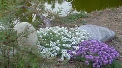 Giardini Zen e giapponesi (Ichiro Fukushima) Tags: zen giardinozen giardinogiapponese