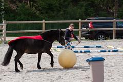 IMG_1756 (florian_1_1_2) Tags: horse funday pferde pferd reiten dressur alzinger gelassenheit reitanlage gemling reitanlagealzinger