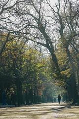 Autumn Light (biancapreusker) Tags: africa street city travel autumn trees people garden southafrica walk pedestrian capetown photowalk avenue companysgarden thechallengefactory capetownphototours