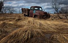 (Rodney Harvey) Tags: abandoned grass rural truck rust decay north marsh dakota