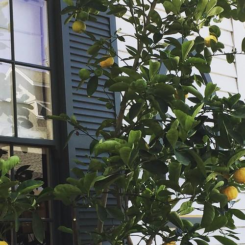 #lemons #napa #summer