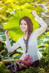 Thuy Van (duyblog.com  nguyenanhduy.com) Tags: lotus sen msen ym trongdamgidepbangsen