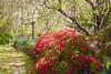 _MG_3542 (TobiasW.) Tags: spring frühling fruehling garden gardenflowers gartenblumen gärten garten blue mountains nsw australien australia backyard public