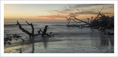 Driftwood beach Sunrise (Fraser Ross) Tags: driftwood driftwoodbeach goldenisles georgia romanticbeach firstlight deadtrees drowned swallowed sunriseatthebeach nikond800 nikon2470mm topazsoftware