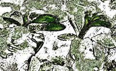 16-357 (lechecce) Tags: 2016 abstract flickraward digitalarttaiwan trolled awardtree shockofthenew artdigital netartii nature art2016 sharingart