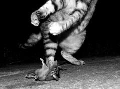 Tamn  (carlosdeteis.foto) Tags: carlosdeteis galiza galicia cats gatos jatos