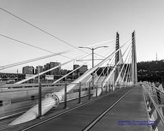 Black & White Look at Tilikum Bridge Geometry (AvgeekJoe) Tags: bw blackwhite blackandwhite bridgeofthepeople d5300 dslr nikon nikond5300 oregon portland tilikumcrossing tilikumcrossingbridgeofthepeople willametteriver bridge cablestayedbridge transitbridge