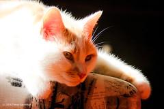 Sunbathing cat (Trevdog67) Tags: sunny sunbathing cat tomcat lounging sun bright warm pet nikon d7100 hdr sigma 150600mm contemporary