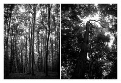 Into the woods. (mariazaharievaPH) Tags: trees woods wood leaf earth nature black white bw blackandwhite outdoor monochrome bulgaria