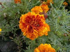 2016-08-14-6603 (vale 83) Tags: flower nokia n8 colourartaward macrodreams