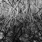 Yucatecan Mangrove thumbnail