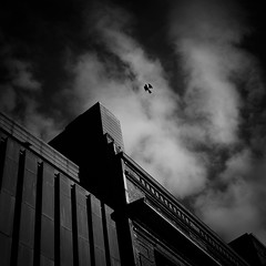 bird (s_inagaki) Tags: bird sky cloud helsinki finland blackandwhite bnw bw