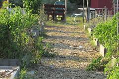 IMG_0231 (hammonton_garden) Tags: 2016 communitygarden fall hammonton southjersey nj gardenstate