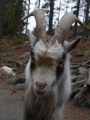 Gjerstad dyrepark