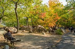 Bear Mountain Cruise-6014 (Greenruby) Tags: bearmountain foliage bench womanwithdog autumn newyork woman dog rocks trees leaves path rocklandcounty
