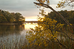 Just Before Sunrise (kevin kludy) Tags: autumn fall landscape lake dawn morning foliage yellow michigan usa quiet tranquil tranquility peaceful
