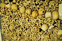 Paris Les Catacombs 13.9.2016 3839 (orangevolvobusdriver4u) Tags: 2016 archiv2016 france frankreich paris friedhof cemetary katakombe lescatacombs catacomb knochen bones skull schdel