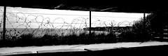 Normandie/foxhole (pellepersson) Tags: blackandwhite monochrome outdoor sea coast