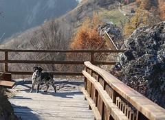 Eh mais t'es l toi (bulbocode909) Tags: chiens nature montagnes automne arbres escaliers barrires rochers orange