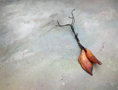 autumn beads by greybirdstudio (greybirdstudio) Tags: greybirdstudio isle skye scotland artisan adornment artist beach beachcomber bead ceramic clay craft pod organic nature blossom jewellery porcelain painting etsy uk textile hemp linen wax silver necklace shore shell roman glass wearable art earthy natural sculpture sculptural stitch sewn sewing stitchin sea ocean mer wave cluster urchin starfish hand handmade