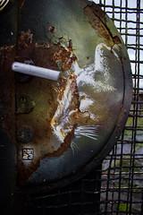 Le chat (Fender !) Tags: france alsace strasbourg bas rhin canon 1200d chat poignée graffiti graf peinture grille rouille