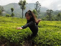 India 2012 trip 158 (gita_rash) Tags: india2012trip gita rash conoor ooty tamil nadu tea garden yoga