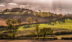 Autumn Afternoon at Moor Hill (Ninja Dog - 忍者犬) Tags: 2016 november autumn moorhill leicestershire midlands england english uk landscape countryside rural nature natural d7200 raw backlighting contrejour sunlight colour trees fence farming fields hedgerows tranquil peaceful serene
