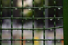 Rainy Day #2 (AdrianoSetimo) Tags: fence cerca grade rainy rain chuva chuvoso olympusomdem10 em10 olympusmzuikodigitaled1240mmf28pro green verde bokeh depthoffield dof raindrops rainyweather climachuvoso