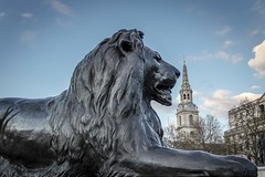 Trafalgar Square Lion (Fabien Georget (fg photographe)) Tags: jaune lion trafalgar square london landscape ayezloeil sky shot photography photo great phographers greatphotographer french touch award bigfave beautiful canoneos600d canon elmundopormontera eos elitephotography elitephotographie fabiengeorget fgphotographe flickrdepot flickunited flickrunited geotagged instantané mordudephoto mordudephotexposure mordusdephoto perfectphotograph perfectpictures paysages royaumeuni uk